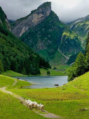 远歌国际_维也纳变奏曲_登山